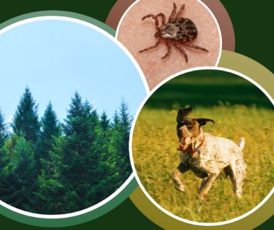 Image of dogs trees and tick
